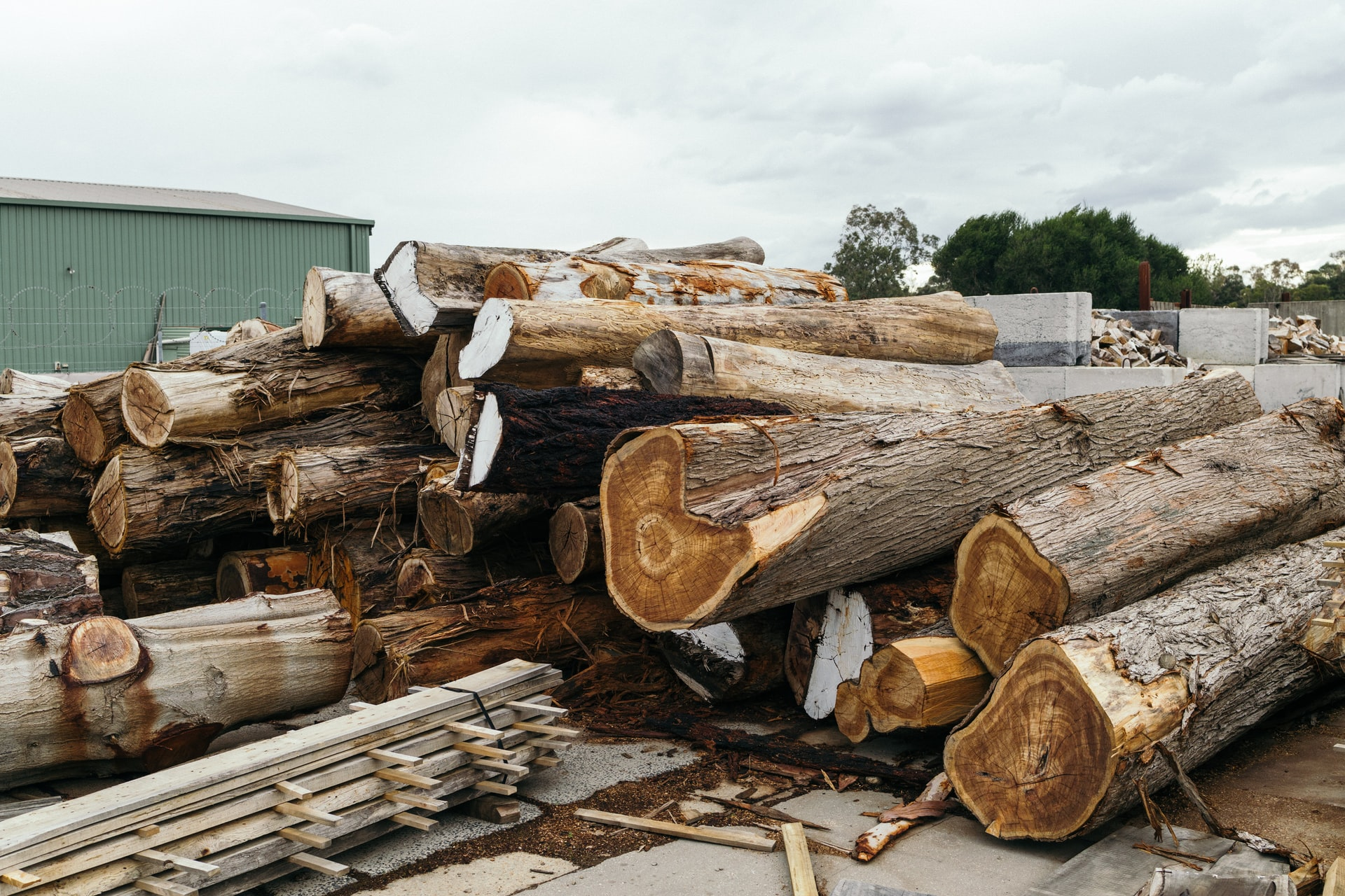 Sustainable design step 2, logs in a timber yard